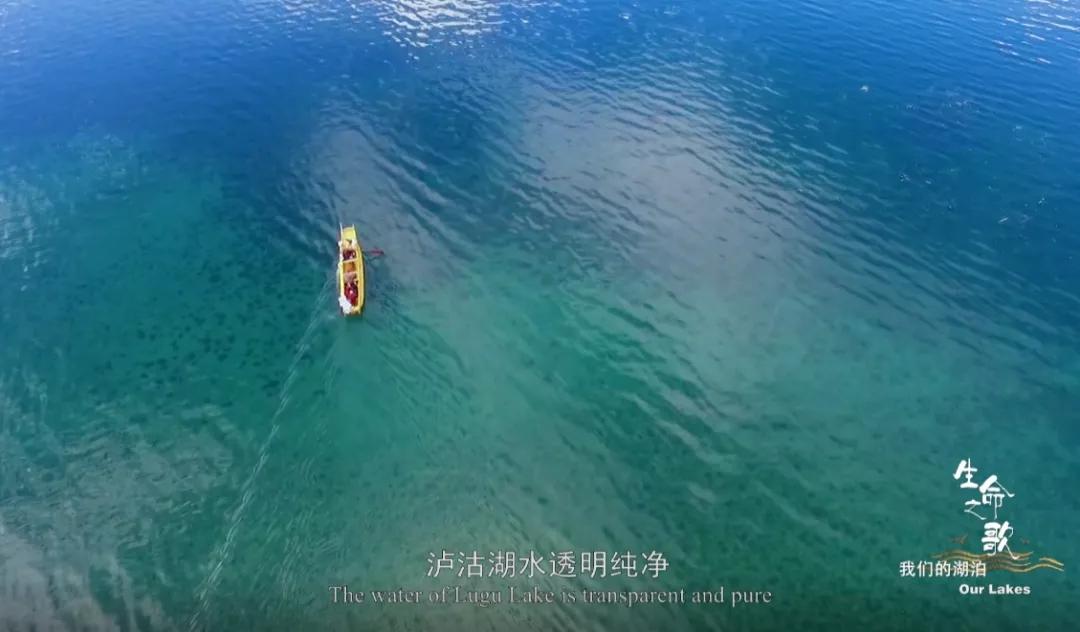 【生物多样性】《生命之歌·我们的湖泊》无数生命迎风起舞的天堂